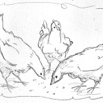 sketch_chickens