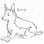 sketch_corgi