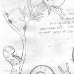 sketch_gardenbugs