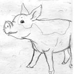 sketch_pig