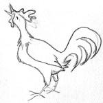 sketch_rooster